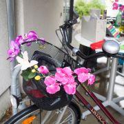 Ausschnitt eines Fahrrades mit Blumen am Gepäckskorb