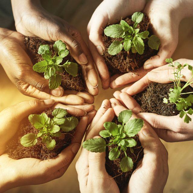 Hände mit Erde und grünen Pflanzen